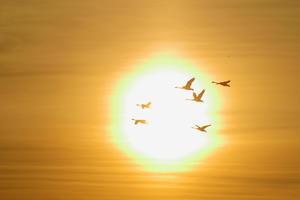 白鳥 - 四季折々