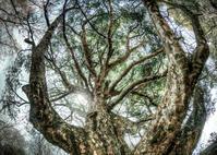 大樹降臨 - ぽとすのくずかごⅡ