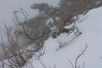 冬の雷鳥 - 夢月の気まぐれPhoto blog