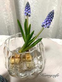 かわいい球根花・ムスカリと、ある日のわが家の晩ごはん - 趣味とお出かけの日記