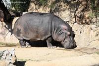 2021年1月王子動物園2その2 - ハープの徒然草