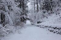 雪景色 - 旧軽井沢より  つるや旅館からのお便り