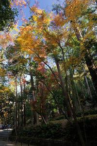 2020京都の紅葉・鹿ヶ谷法然院 - デジタルな鍛冶屋の写真歩記