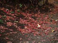 雨の日は「宮部みゆき」を抱えて - hibariの巣
