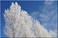 樹氷の花 - 北海道photo一撮り旅
