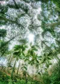 石楠花の森 - ぽとすのくずかごⅡ