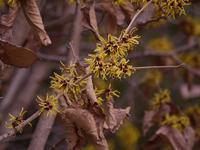 葛西臨海公園の花と鳥 - 花と葉っぱ