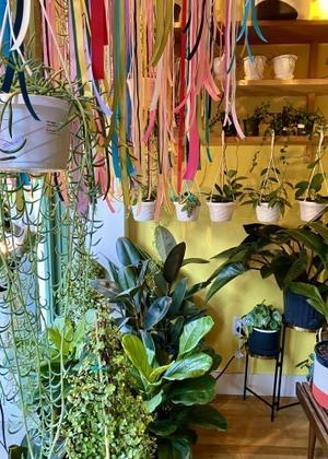 Plants make me happy! - ニューヨークでひと息しましょ 2