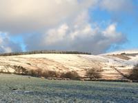 雪 - イギリス ウェールズの自然なくらし