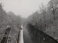 2年ぶりの雪とコロナの状況 - 期間限定 ロンドン生活 日々コレ日常