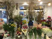 2月春の訪れ - 花藤ブログ