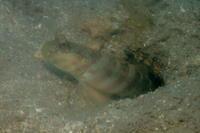 21.1.25沖縄県も緊急事態宣言に - 沖縄本島 島んちゅガイドの『ダイビング日誌』