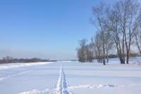 雪の河原でハヤブサ発見2021/01/25 - 今朝の一枚 石狩川の朝