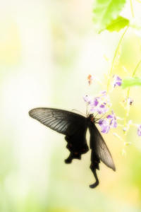 昆陽池昆虫館で撮影は汗をかくほど温かい - スポック艦長のPhoto Diary