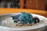 水浴びB.Bの記録(1月23日) - FUNKY'S BLUE SKY