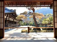 世界文化遺産 天龍寺の曽源池庭園を守る赤松が無残な姿に - ライブ インテリジェンス アカデミー(LIA)