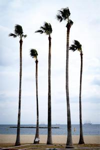 パームツリー - ホンテ島 日記