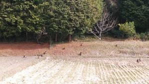 京都 南山城村自然の家でネヴィスTCお試しキャンプ その1 - 気ままにソロツー@関西