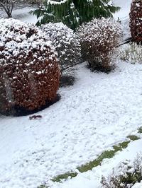 アナ雪フィーバー&雪が積もったので雪遊び☆ - ドイツより、素敵なものに囲まれて②