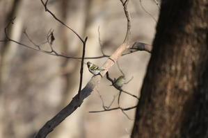 隣県の里山公園でマヒワに出逢う - 私の鳥撮り散歩
