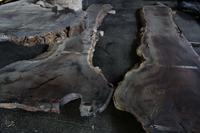 雰囲気のある一枚板カウンター材を出す - SOLiD「無垢材セレクトカタログ」/ 材木店・製材所 新発田屋(シバタヤ)