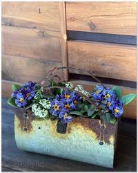 プリムラの寄せ植え - 小さな庭 2