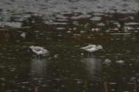 ルリビタキやビンズイが見られました!★先週末の鳥類園(2021.1.23~24) - 葛西臨海公園・鳥類園Ⅱ