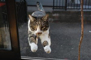 キトと冒険 -