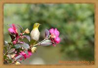 いつもの公園、いつもの野鳥たちを鳥×撮り2021.01 - 鳥×撮り+あるふぁ~