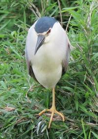 【令和2年度第3回霞ヶ浦の自然観察「霞ヶ浦湖岸で野鳥を観察しよう!」WEBページを公開しました!】 - ぴゅあちゃんの部屋