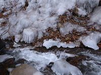 温川の氷壁(2) (2021/1/22撮影) - toshiさんのお気楽ブログ