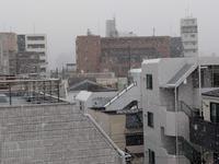 雪が降ったよ! - ゲストハウス東京