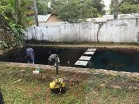 自宅庭園の大改造中⑦今度は池の大掃除 - ハチドリのブラジル・サンパウロ(時々日本)日記