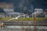 12月の北浦湖岸 - Buono Buono!