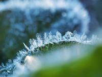 寒い朝のお楽しみ多々良沼編3 - 光の 音色を聞きながら Ⅵ
