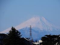 今日の富士山 - Magnolia Lane 2
