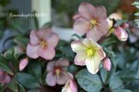 カバオくんに、物申す。⑤ - きょう、花が咲いた。もしかすると、昨日かもしれないが僕にはわからない。
