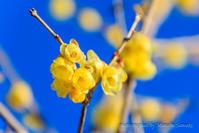巾着田、春の予感 - デジカメ写真集