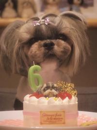 2021.1月ひめたん6歳のbirthday♪ - さくらひめほっこり日和