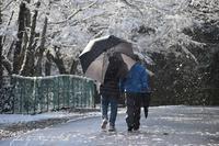 雪道散歩 - Ryu Aida's Photo