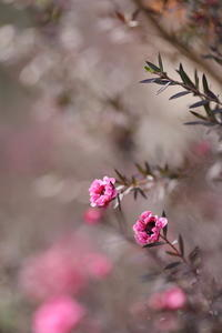 春近し - ecocoro日和