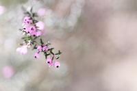冬の終わり - ecocoro日和