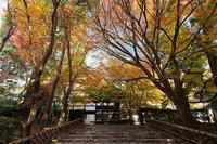 2020京都の紅葉・衣笠竜安寺其の二 - デジタルな鍛冶屋の写真歩記