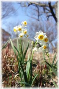 雪中花と春告草 - おだやかに たのしく Que Sera Sera