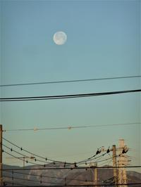 明日から2月だ! - hibariの巣
