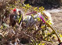 1月末日   1月中に鉢植えバラをやっつけた - マルコの日記