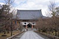 「智積院の梅花」 - ほぼ京都人の密やかな眺め Excite Blog版