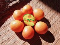 金柑と柑橘愛好会自習 - ないものを あるもので