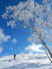 久々の大日ケ岳周辺BC - 山にでかける日