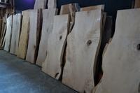 栃(橡)一枚板 - SOLiD「無垢材セレクトカタログ」/ 材木店・製材所 新発田屋(シバタヤ)